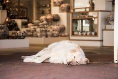 Il cane da guardia fotografia stock
