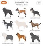 Il cane da pastore cresce, icona messa cani pastore isolata su bianco piano Fotografia Stock