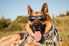 Il cane da pastore tedesco indossa gli occhiali da sole Fotografia Stock