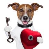 Il cane del biglietto di S. Valentino, apre il mio cuore Fotografie Stock Libere da Diritti