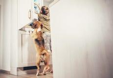 Il cane del cane da lepre e del ragazzo guarda qualche cosa di delizioso in frigorifero Fotografia Stock