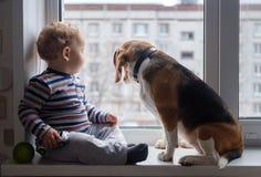 Il cane del cane da lepre e del ragazzo si siede insieme sul davanzale della finestra Immagini Stock Libere da Diritti