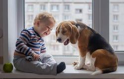 Il cane del cane da lepre e del ragazzo si siede insieme sul davanzale della finestra Fotografia Stock Libera da Diritti