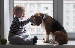 Il cane del cane da lepre e del ragazzo si siede insieme sul davanzale della finestra Fotografia Stock
