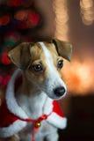 Il cane del nuovo anno Immagini Stock Libere da Diritti