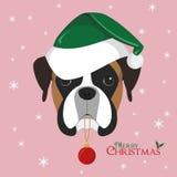 Il cane del pugile con il cappello verde del ` s di Santa ed il Natale giocano la palla Immagine Stock Libera da Diritti