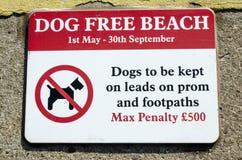 il cane del segno libera la spiaggia Fotografie Stock Libere da Diritti