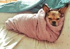 Il cane del trattore a cingoli fotografia stock libera da diritti