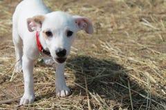 Il cane di Cutie Immagini Stock