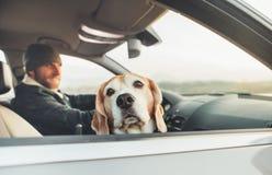 Il cane divertente del cane da lepre che viaggia con il suo proprietario guarda fuori dall'automobile immagini stock libere da diritti