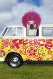 Il cane divertente di hippy, VW trasporta immagine stock libera da diritti