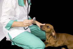 Il cane ed il veterinario ammalati Fotografia Stock Libera da Diritti