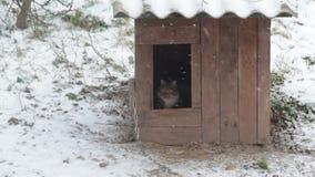 Il cane esce dalla fossa di scolo che scorteccia, gatto entra nel nascondersi della fossa di scolo archivi video