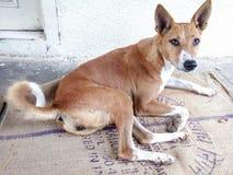 Il cane femminile si siede sulla via Fotografia Stock