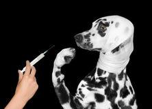 Il cane ferito malato è impaurito dell'iniezione immagine stock