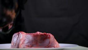 Il cane festivo lecca il manzo della carne cruda stock footage