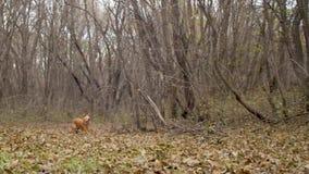Il cane funziona rapidamente attraverso il parco Movimento lento video d archivio