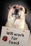 Il cane funzionerà per alimento Fotografia Stock Libera da Diritti