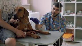 Il cane grazioso si trova con il catetere nella clinica veterinaria archivi video