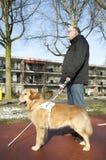 Il cane guida sta aiutando un uomo cieco Fotografie Stock Libere da Diritti
