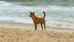 Il cane ha camminato sulla spiaggia archivi video