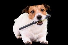 Il cane irsuto con il pettine ha bisogno dei peli che governa e che spazzola Fotografie Stock Libere da Diritti