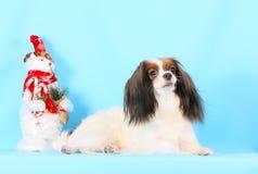 Il cane lanuginoso bianco si trova su un fondo blu Nuovo anno Bello cucciolo lanuginoso Natale Fotografia Stock