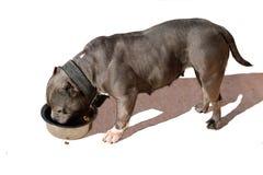 Il cane mangia da una ciotola su un fondo bianco Immagine Stock