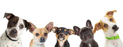 Il cane multiplo cresce in un'insegna di web di fila Fotografie Stock