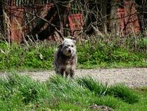 Il cane nel vento Fotografie Stock Libere da Diritti
