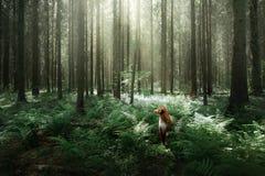 Il cane nella foresta si siede in una felce Animale domestico sulla natura Toller Fotografie Stock