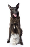 Il cane nero protegge un gatto. Immagine Stock Libera da Diritti
