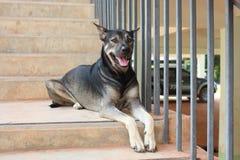 Il cane nero si riposa sulla scala fotografie stock libere da diritti