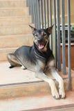 Il cane nero si riposa sulla scala immagini stock libere da diritti