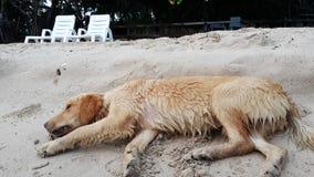 Il cane onesto fotografia stock libera da diritti