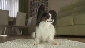 Il cane Papillon si trova sulla coperta in salone Fotografia Stock Libera da Diritti