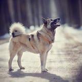 Il cane per una passeggiata nell'inverno Fotografia Stock Libera da Diritti