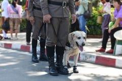 Il cane poliziotto tailandese, polizia equipaggia la tenuta leashed per il cane di formazione fotografie stock
