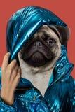 Il cane positivo del ritratto del collage di arte contemporanea ha diretto la donna Concetto moderno della cultura di zine di Pop immagini stock