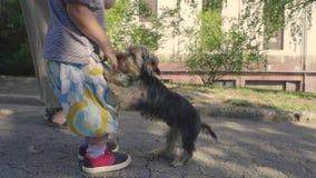 Il cane seccante salta sul ragazzino stock footage