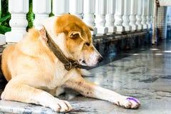 il cane seduto Immagine Stock Libera da Diritti
