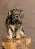 Il cane senza tetto gettato dalla gente Immagine Stock