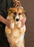 Il cane senza tetto gettato dalla gente Immagini Stock