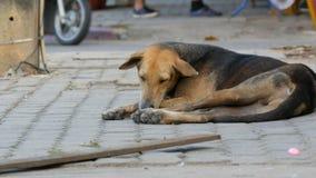 Il cane senza tetto si trova su un passaggio della gente della via della città vicino e non nota il cane stock footage