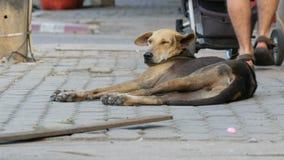 Il cane senza tetto si trova su un passaggio della gente della via della città vicino e non nota il cane archivi video