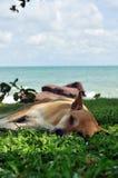Il cane si è alzato sulla spiaggia. immagine stock libera da diritti