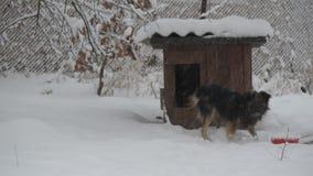 Il cane si allontana a e poi dalla fossa di scolo nell'inverno archivi video