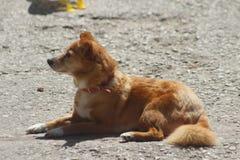 Il cane si rilassa Fotografie Stock Libere da Diritti