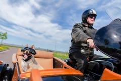 Il cane si siede con gli occhiali da sole in un sidecar del motociclo immagini stock libere da diritti