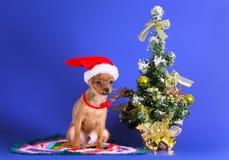 Il cane si siede in un cappello di Santa Claus con un albero di Natale Fotografie Stock Libere da Diritti